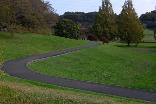 S字構図の丘