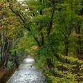 Photos: 〈松中橋の秋模様〉