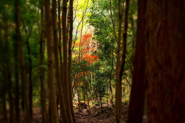林より垣間見える