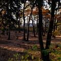 Photos: 朝陽射す公園