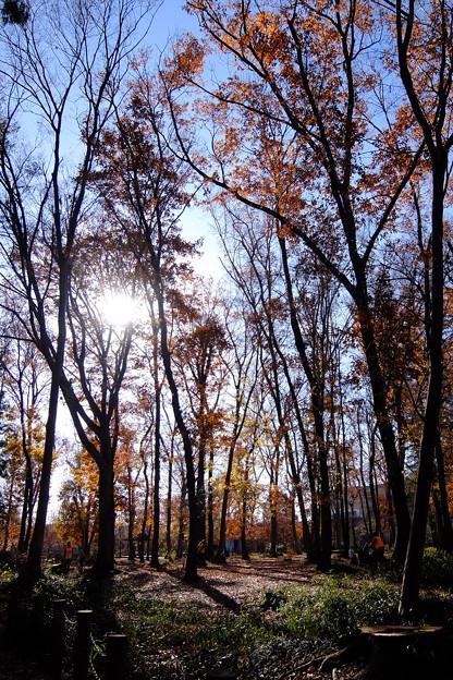 林間広場を眺む