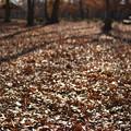 落ち葉の広場