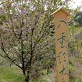 Photos: 都幾川 (66)