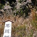 Photos: 都幾川 (68)