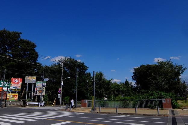 ムサシノ (11)