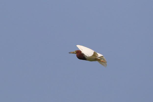 写真: ツートーン飛行体
