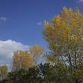 写真: 黄と青
