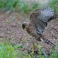 Photos: 狩の練習
