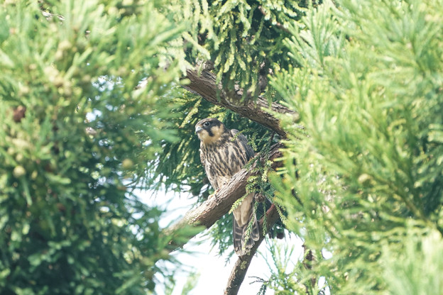 Photos: 木陰で休憩