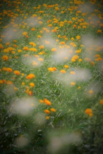 Photos: '18_07_08 7M2_takase-009 (2)