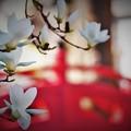 Photos: r_'19_04_16 7M3_suwa-001- (2)