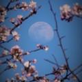 Photos: r_'19_04_16 7M3_suwa-061- (2)