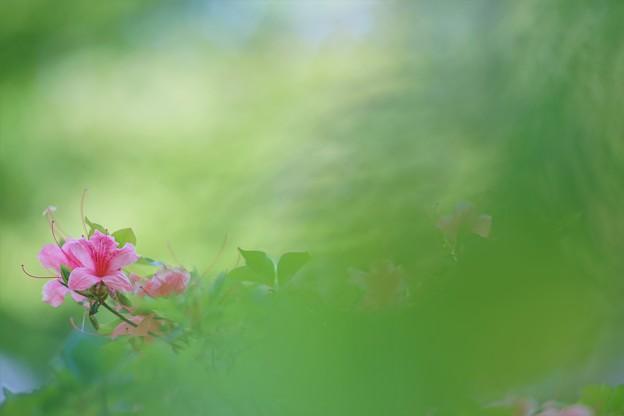 '19_05_20 7m2_shakado-073 (2)