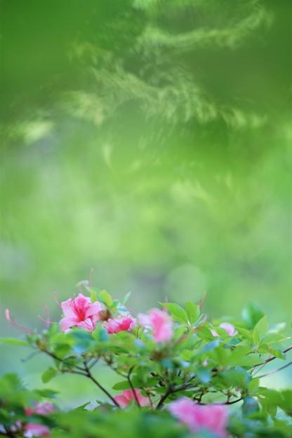 Photos: '19_05_20 7m2_shakado-083 (2)