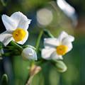 白く咲く花