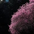 胸騒ぎのピンク