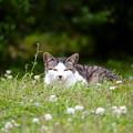 Photos: 野原の猫