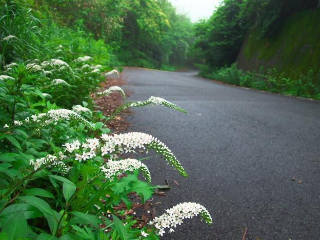 写真: 山道に