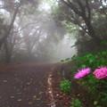 写真: 霧の山道