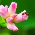 写真: 小さな花に小さな訪問者