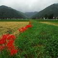 写真: 畔に咲く