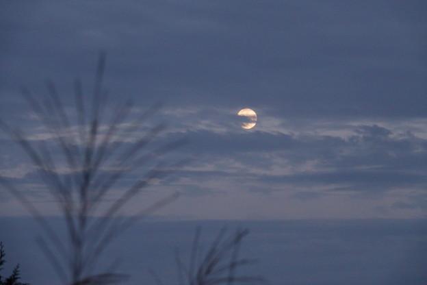 写真: 十四夜の月 雲間に