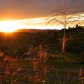 Photos: 夕陽に輝いて