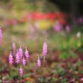 写真: 優雅な紫