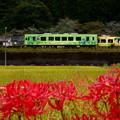 写真: 北河内駅の「こもれび号」と「きらめき号」