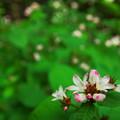 写真: ミゾソバの季節