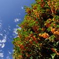 Photos: 秋の香り
