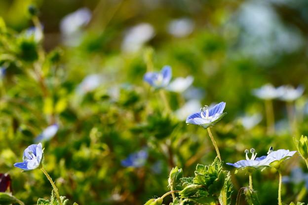 青い春がいっぱい