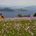 Photos: 薄紫の草原