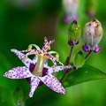 Photos: 野に咲く花?