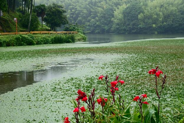小糠雨降る黒杭貯水池