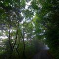 Photos: 暗い山道