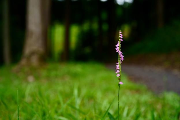 森の小径の傍らに