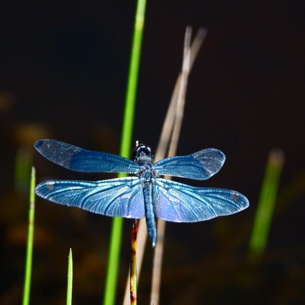 青く輝く鋼の翼