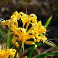 黄色も咲き始めました (=^^=)