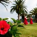 Photos: 真っ赤なドレス