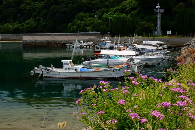 漁港の彩り