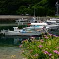 Photos: 漁港の彩り