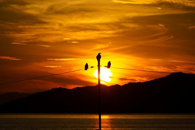 夕陽の三羽烏