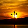 Photos: 夕陽の三羽烏