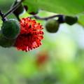 花か?果実か?