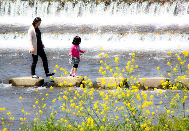 加茂川で遊ぶ親子