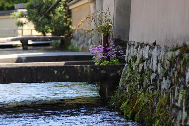 京都 上賀茂