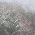 雲の中に立つ木々