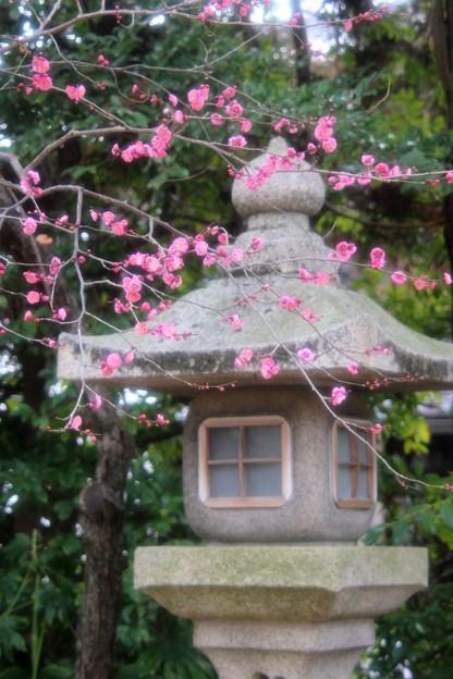 梅と石灯篭