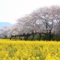 Photos: 藤原宮跡
